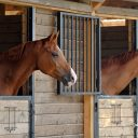 How to run a successful horse stable