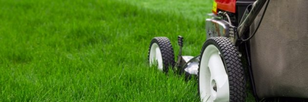 Lawn care and landscaping business – How to start it in several simple steps